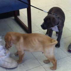 Photo taken at Dr john's Pet Care by Michelle B. on 12/28/2012