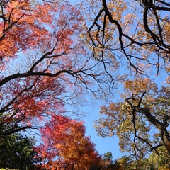 Photo taken at 源氏山公園 by zeroro_P02A on 12/8/2012