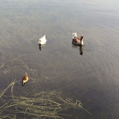 Photo taken at Lake Ivanhoe Park by Doug L. on 6/29/2014