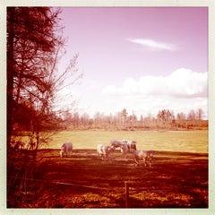 Photo taken at Bosgårdin Kartano by Laura S. on 5/11/2013