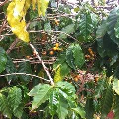 Photo taken at Kauai Coffee Plantation by Nina Y. on 10/3/2012