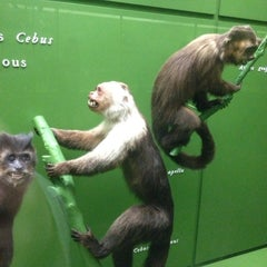 Photo taken at Hall Of Primates by Adrienne M. on 4/18/2014
