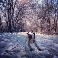 Photo taken at Lincoln Statue Dog Park by Rob P. on 2/14/2014