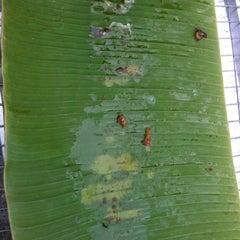 Photo taken at ร้าน. บังหมัด.ไก่ย่าง เนื้อย่าง by Sofia🍒 on 10/5/2012