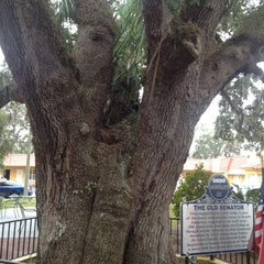 Photo taken at The Old Senator Tree by Mike R. on 11/18/2012