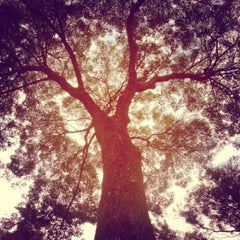 Photo taken at Parque Arboledas by Edichi E. on 11/5/2012