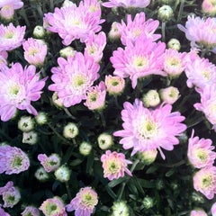 Photo taken at Pike Nurseries by Desiree H. on 10/16/2012