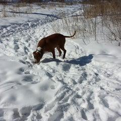 Photo taken at Howard Dog Park by Lisa E. on 3/2/2014