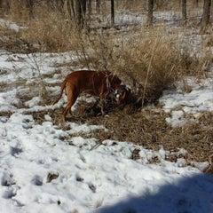 Photo taken at Howard Dog Park by Lisa E. on 3/16/2014
