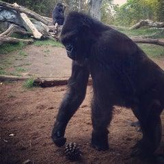 Photo taken at San Diego Zoo by Nick J. on 4/16/2013