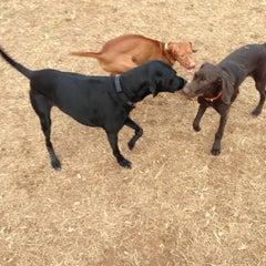 Photo taken at Oakton Dog Park by Jody F. on 12/2/2012