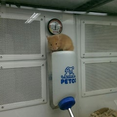 Photo taken at Petco by Hannah R. on 9/5/2014