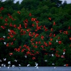 Photo taken at Caroni Bird Sanctuary by Alisia R. on 3/31/2013