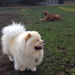 Photo taken at St. Mary's Park Dog Run by Donnie B. on 12/12/2013