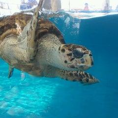 Photo taken at Texas State Aquarium by Ryan F. on 7/5/2013