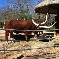 Photo taken at Ankole Cattle Exhibit by Joel L. on 2/11/2012