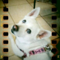 Photo taken at Shane Veterinary by Lanaea B. on 1/30/2012