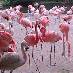 Photo taken at Zoo Praha | Prague Zoo by Elena S. on 8/12/2012