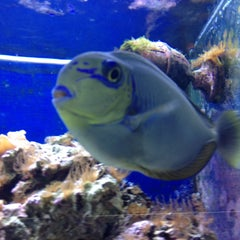 Photo taken at Moby Dick Pet Store by Jewels (Linda) S. on 6/1/2013