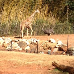 Photo taken at Zoo Atlanta by Brian J. on 2/5/2013