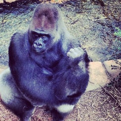 Photo taken at Little Rock Zoo by Anthony C. on 10/2/2012