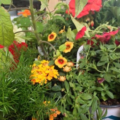 Photo taken at Nicks Garden Center by Natalie A. on 6/9/2013