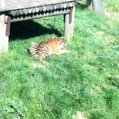 Photo taken at Safari de Peaugres by Laetitia R. on 6/16/2013