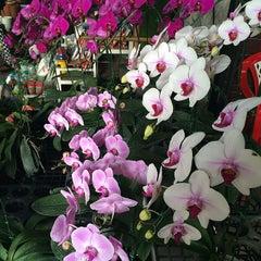 Photo taken at Siam Orchid Center (ศูนย์กล้วยไม้สยาม) by Irina_bkk on 4/6/2014