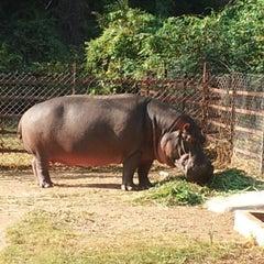 Photo taken at Nehru Zoological Park by Satyanarayana G. on 12/16/2012