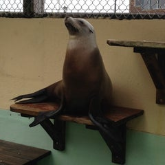 Photo taken at Morro Bay Aquarium by Victoria S. on 4/25/2014