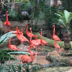 Photo taken at Dallas World Aquarium by Ashley J. on 1/20/2013