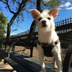 Photo taken at Peter Detmold Park Dog Run by Jenn M. on 10/17/2015