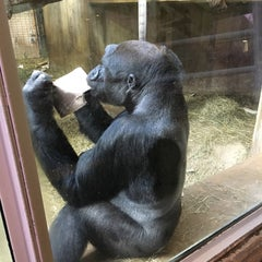 Photo taken at Great Ape House at the National Zoo by Marissa on 3/7/2016