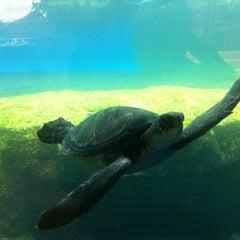 Photo taken at Maui Ocean Center, The Hawaiian Aquarium by カナエ ハ. on 7/21/2011