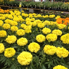 Photo taken at The Home Depot by Tracy F. on 4/13/2013