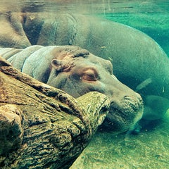 Photo taken at San Diego Zoo by Grayson C. on 4/14/2013