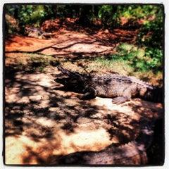 Photo taken at Crocodile Sanctuary by Stuart P. on 11/17/2013
