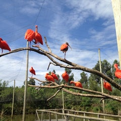 Photo taken at Gramado Zoo by Marcelo M. on 11/30/2012