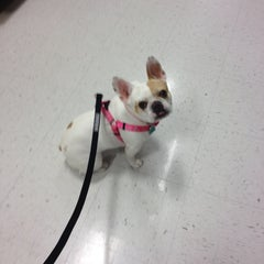 Photo taken at PetSmart by BEN on 1/29/2014