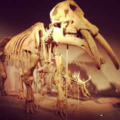 Photo taken at Denver Museum of Nature and Science by Colorado C. on 10/15/2012