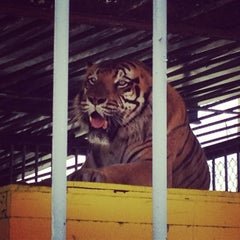 Photo taken at Tiger Truckstop by Mike D. on 6/11/2013