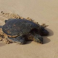 Photo taken at Alligator Beach by David V. on 11/16/2012