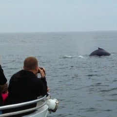 Photo taken at New England Aquarium Whale Watch by Jesus P. on 8/13/2013
