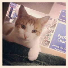 Photo taken at PetSmart by Gloria W. on 9/30/2012