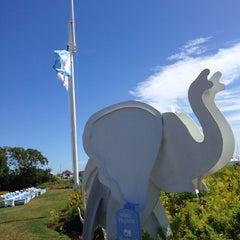 Photo taken at White Elephant by Kim G. on 9/8/2014