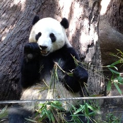 Photo taken at San Diego Zoo by Jess N. on 4/13/2013