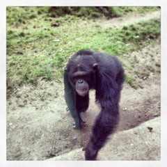 Photo taken at Monkey World - Ape Rescue Centre by Vic C. on 4/24/2013