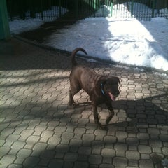 Photo taken at Peter Detmold Park Dog Run by Brandy C. on 2/3/2011