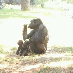 Photo taken at Zoo Atlanta by Stephen N. on 7/3/2011