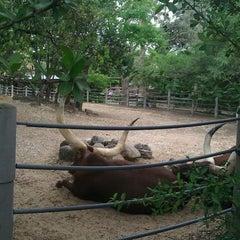 Photo taken at Ankole Cattle Exhibit by Eddy W. on 4/2/2011